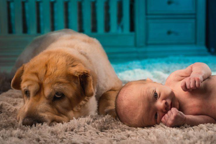 I bambini che vivono con i cuccioli