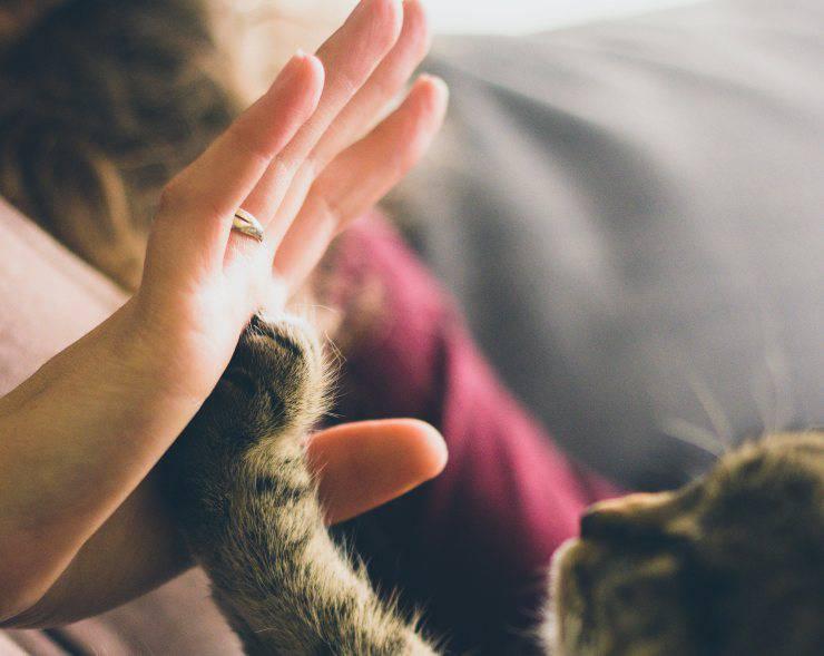 Antiparassitario su animali domestici