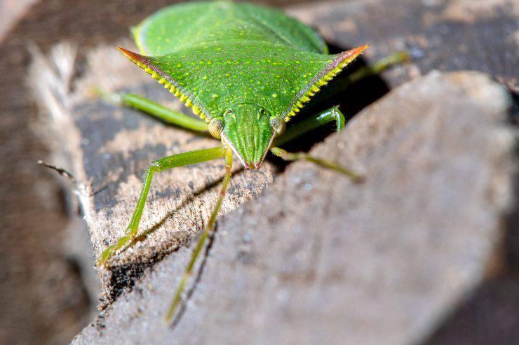 Diventare entomologo