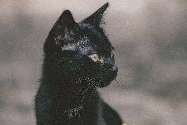 Leggende sul gatto