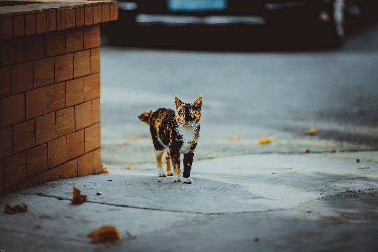 Animali vittime della strada