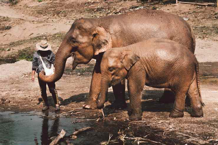 Animali più anziani del mondo