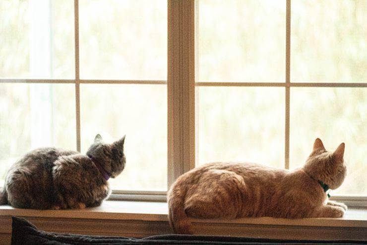 Il vecchio gatto odia il nuovo gatto