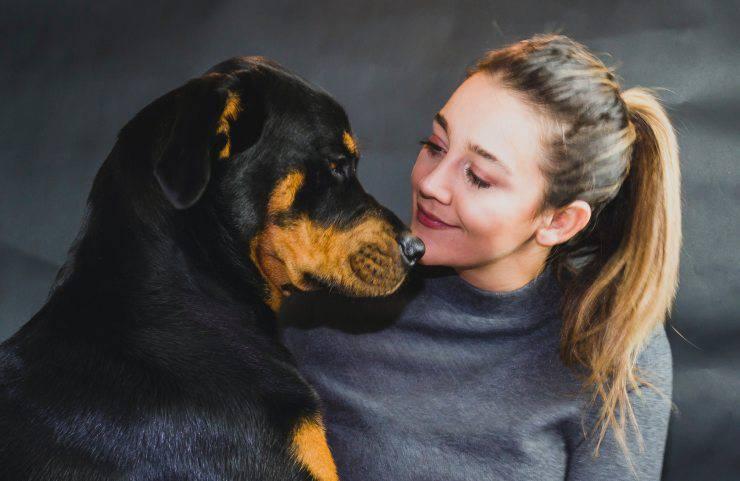 Adottare un Rottweiler