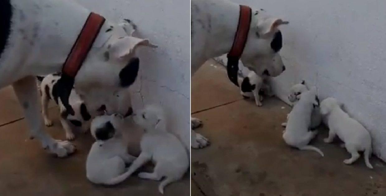 mamma cane
