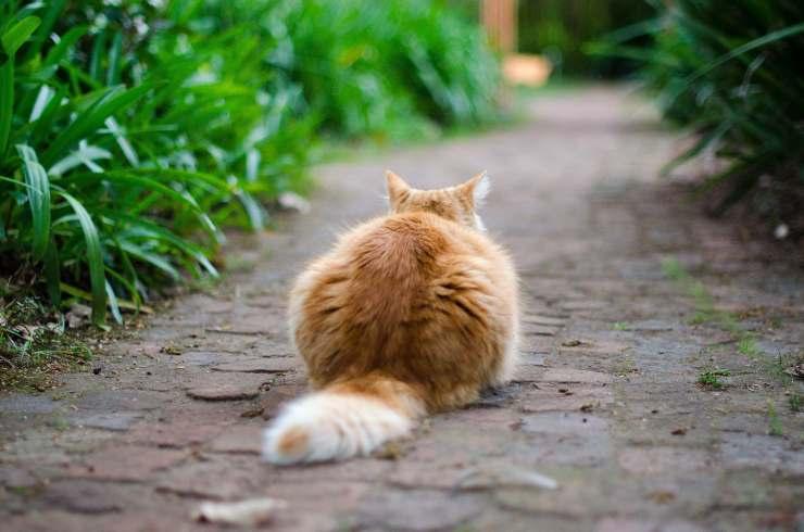 Il gatto scappa