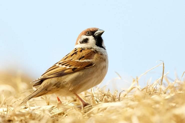 Predatori di uccelli
