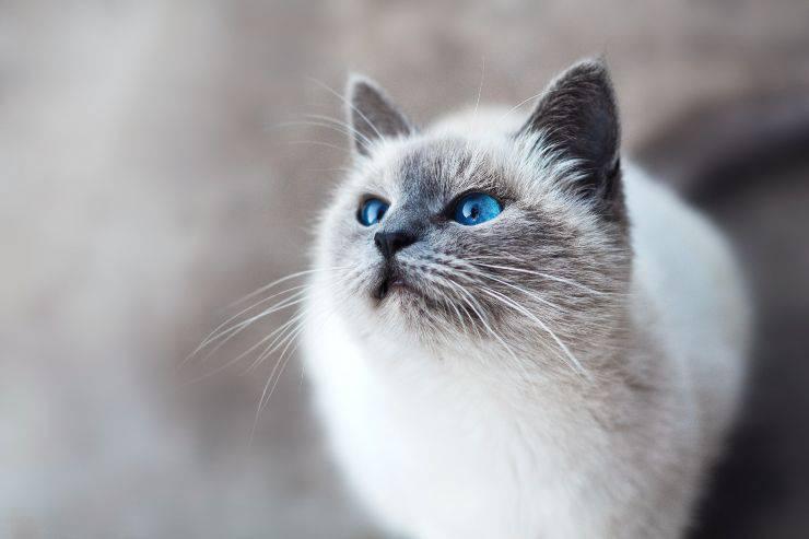 È vero che i gatti...?