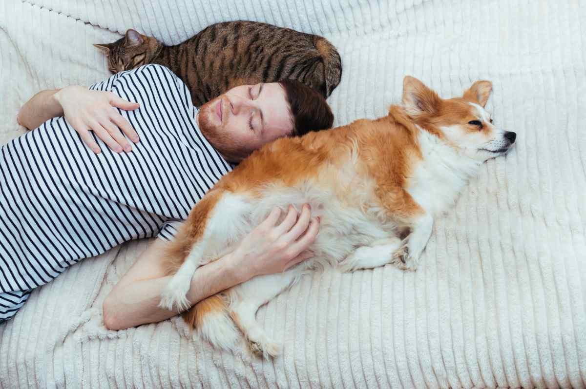Affidamento animale domestico se i coniugi si separano