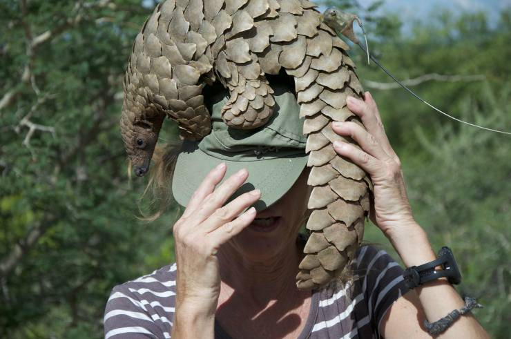 Pngolino sul cappello