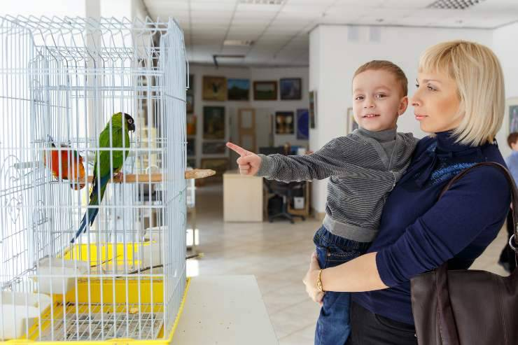 pappagalli e bambini