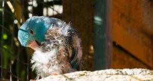 Le malattie più comuni dei pappagalli