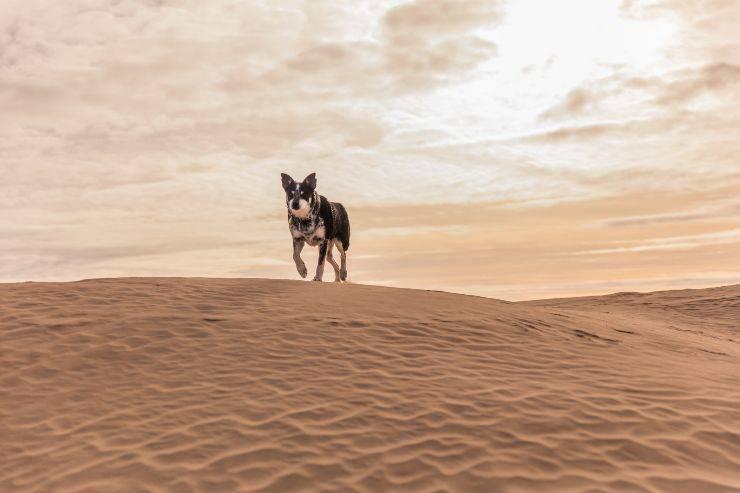 Combattere la desertificazione