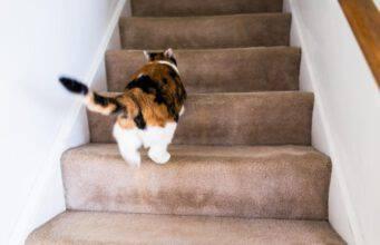 perché il gatto corre all'improvviso per casa