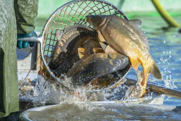 pesci pescati