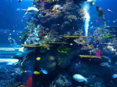 Nuove specie di pesci scoperte negli ultimi anni