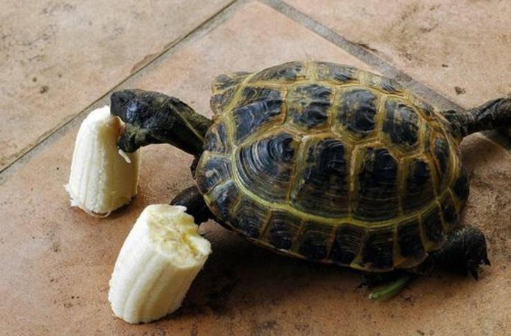 Cibi adatti e non adatti per le tartarughe: cosa mangiano e cosa fa male