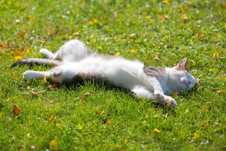 protezione solare gatto