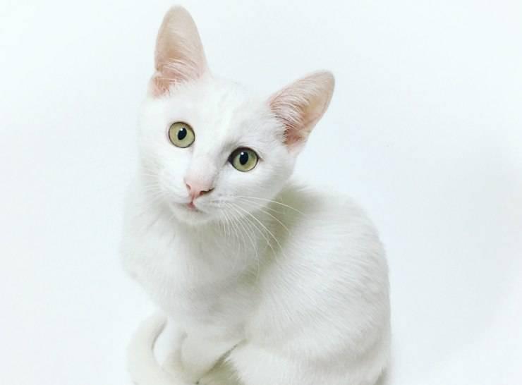 Fare foto al gatto