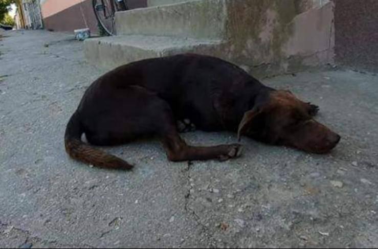 Remy il cane adottato