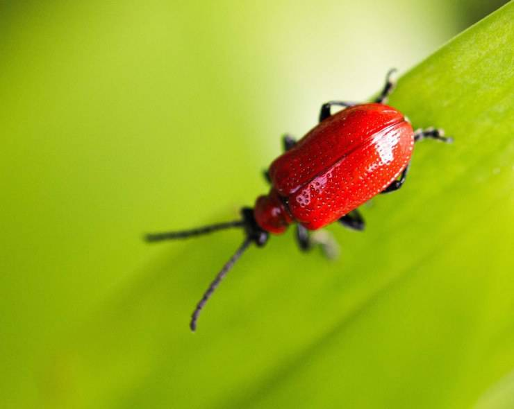 Esperto in entomologia