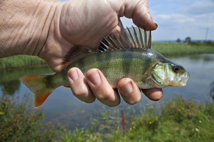 Pesci di mare e pesci di fiume