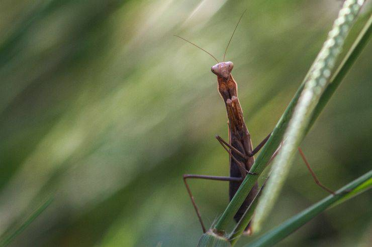 Proteggere la biodiversità