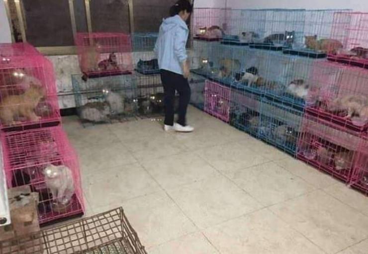 700 gatti salvati in Cina