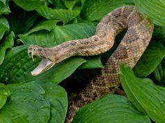 Serpente in giardino