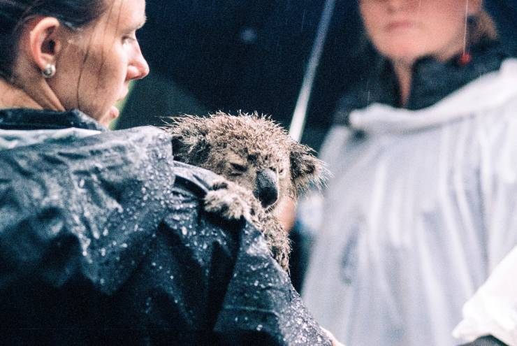 Contro i diritti degli animali