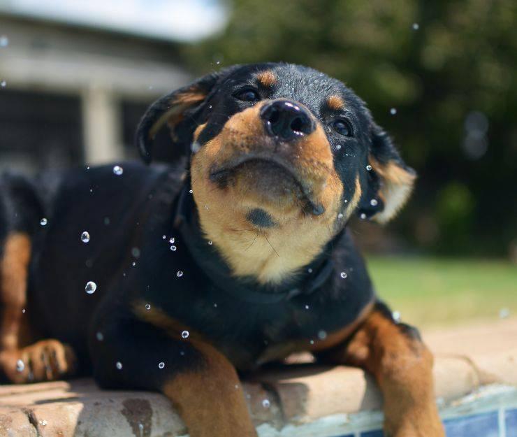 Migliore cane da guardia