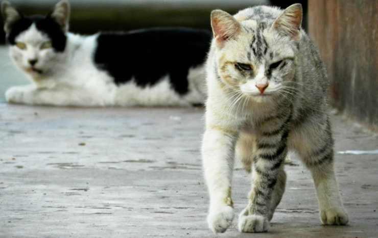 gatto malconcio (Foto Pixabay)