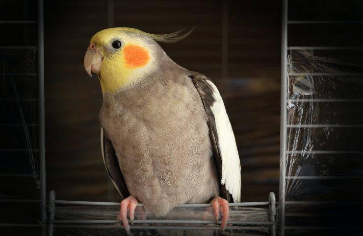 Adottare un uccello
