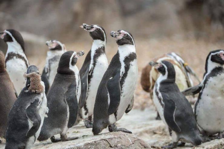 Supermercato aiuto pinguini Zoo