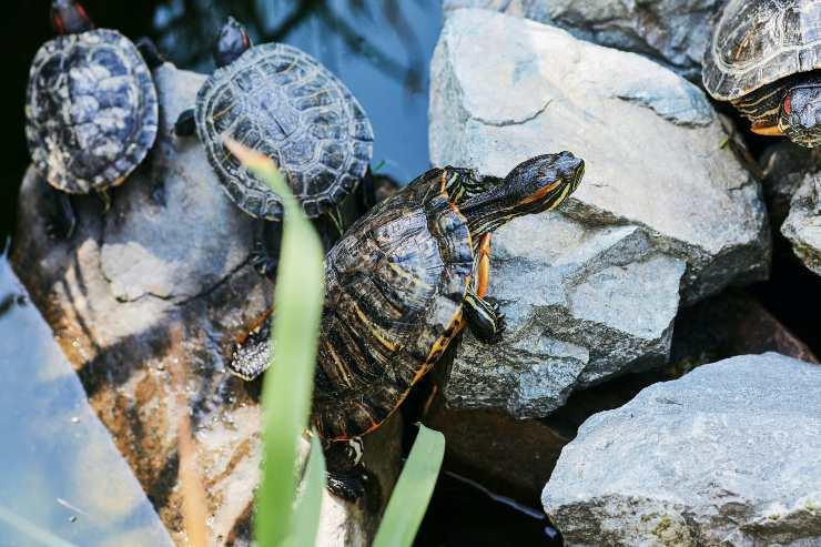 Coccolare la tartaruga