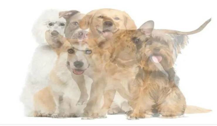 test quale cane riesci a vedere
