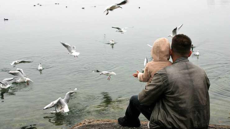 La bimba che ciba i gabbiani (Foto Pixabay)
