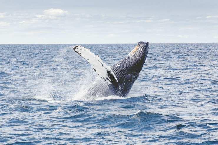 Giornata mondiale degli oceani 2020
