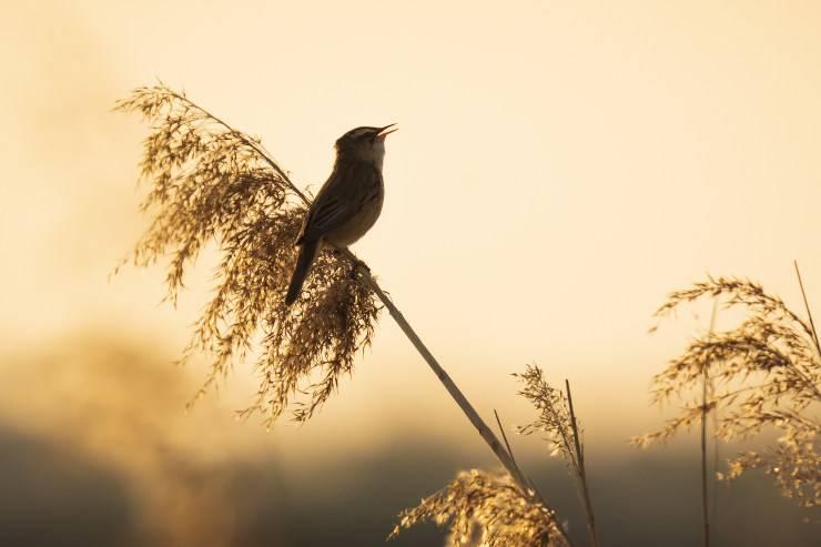 uccelli all'alba