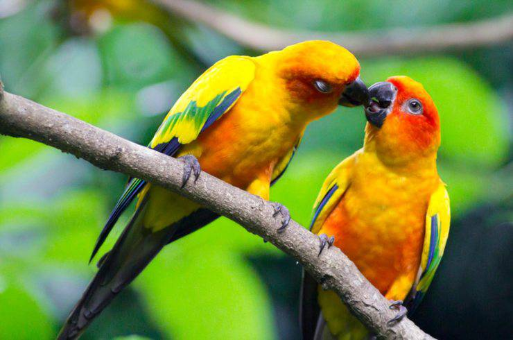 Rituali amorosi degli uccelli più bizzarri: come si corteggiano i pennuti