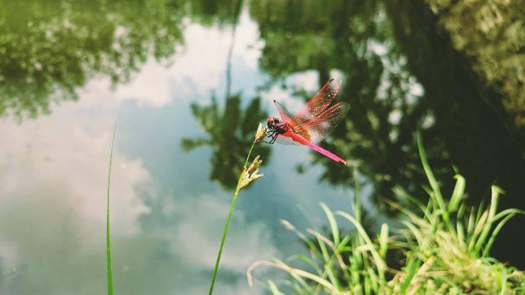 Libellule e romanticismo