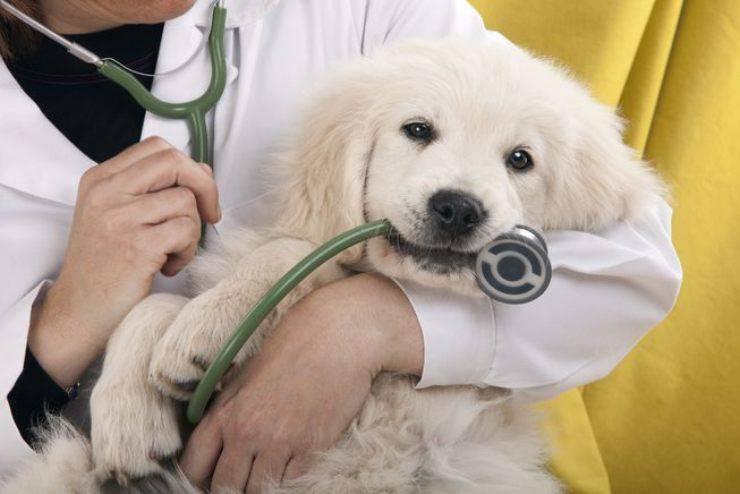 Prendere la temperatura al cane