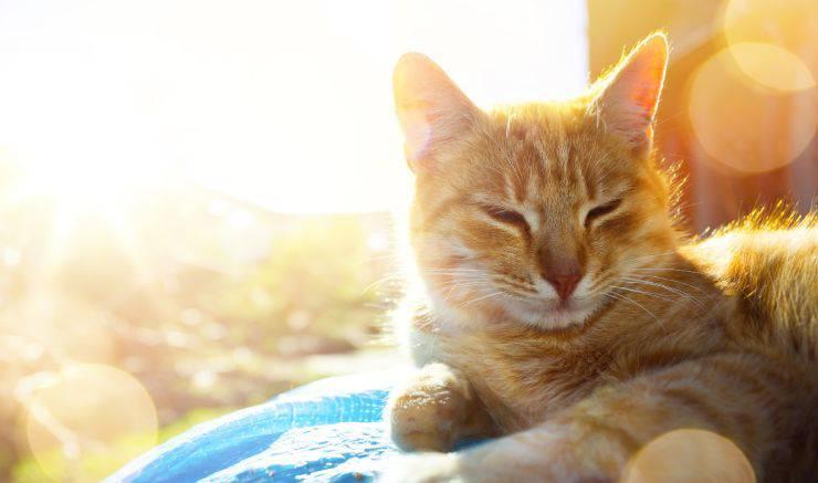 gatti e vitamina d