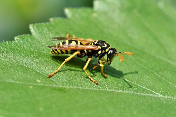 insetto su foglia
