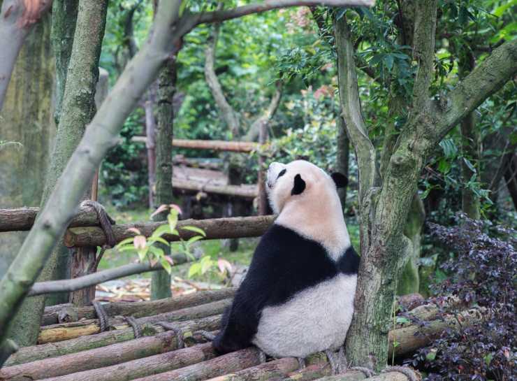 Boicottare gli zoo