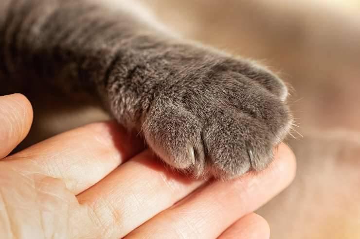 zampe gatto