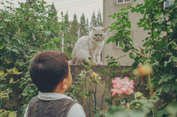 Parlare a un gatto