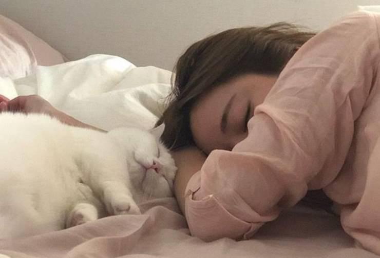 Come dorme il nostro gatto: le varie posizioni e cosa significano