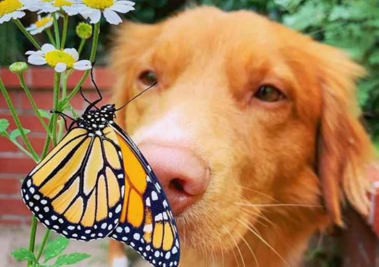 la farfalla sul naso del cane (Foto Instagram)
