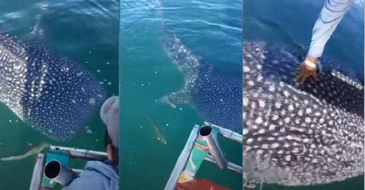 squalo balena pescatori